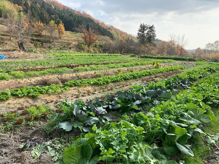 川波農園.jpg